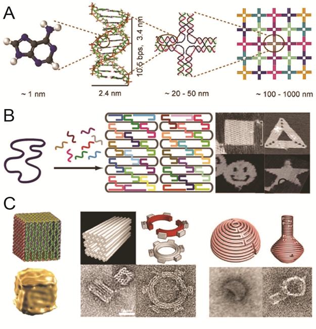 Research on bionanotechnology